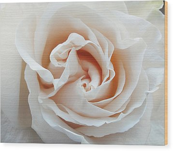 White Rose Wood Print by Tiffany Erdman