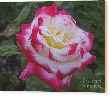 White Rose With Pink Texture Hybrid Wood Print