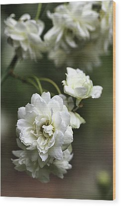 Wood Print featuring the photograph White Roses by Joy Watson