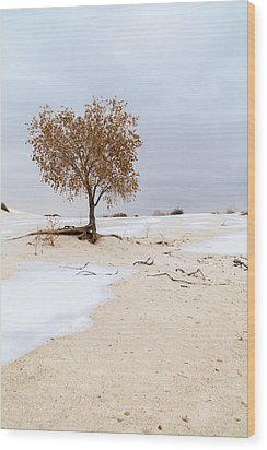 White Sands Lone Tree Wood Print by Brian Harig