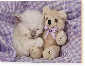 White Sleeping Cat Wood Print by Greg Cuddiford