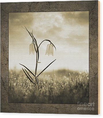White Snakes Head Fritillary In Morning Dew Wood Print by Tim Gainey