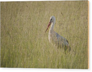 Wood Print featuring the photograph White Stork by Antonio Jorge Nunes
