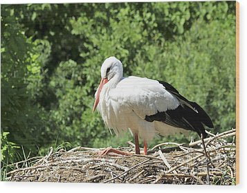 Wood Print featuring the photograph White Stork  by Teresa Zieba