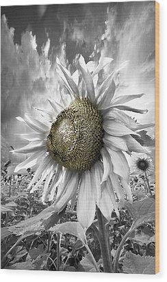 White Sunflower Wood Print by Debra and Dave Vanderlaan