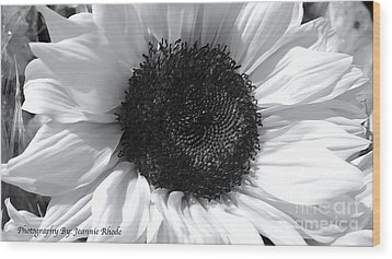 Wood Print featuring the photograph White Sunflower by Jeannie Rhode