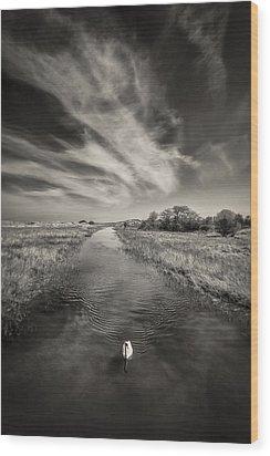 White Swan Wood Print by Dave Bowman