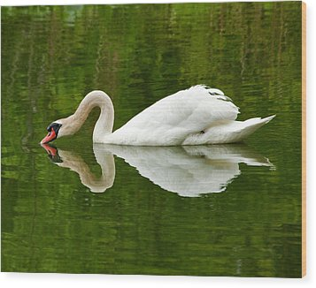 Wood Print featuring the photograph Graceful White Swan Heart  by Jerry Cowart