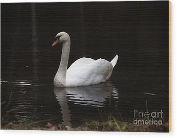 White Swan Lake Wood Print