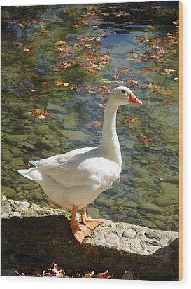 White Swan Wood Print