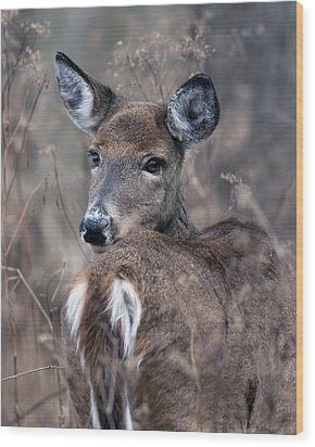 White-tail Beauty Wood Print
