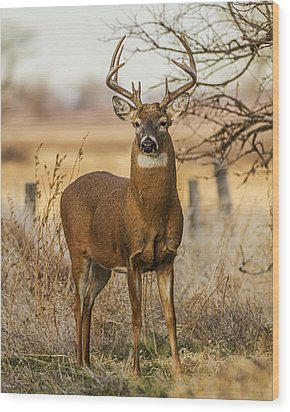 White-tail Buck Wood Print by Rob Graham