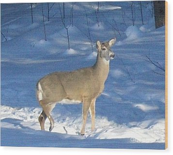 Wood Print featuring the photograph White Tail Deer by Brenda Brown