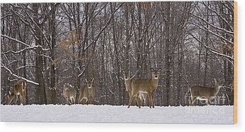 White Tailed Deer Wood Print by Anthony Sacco