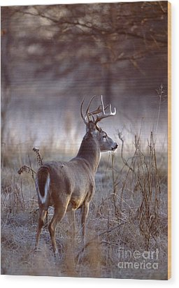 Wood Print featuring the photograph White-tailed Deer Buck by Jack R Brock