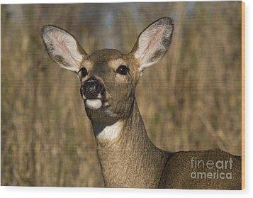 White-tailed Deer Wood Print by Linda Freshwaters Arndt
