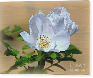 White Tea Rose Wood Print