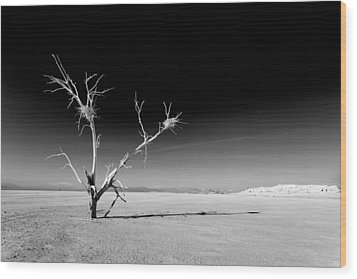 White Tree Wood Print by Peter Tellone