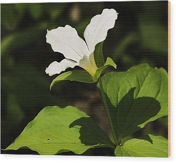 Wood Print featuring the photograph White Trillium by Al Fritz