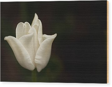 Wood Print featuring the photograph White Tulip by Jacqui Boonstra
