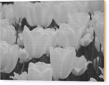 White Tulips B/w Wood Print by Jennifer Ancker