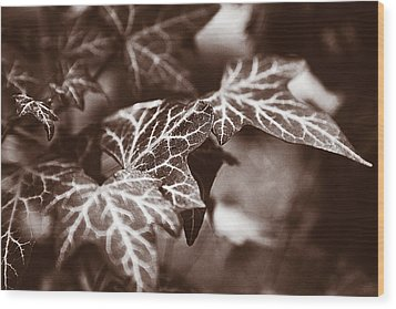 White Veins Wood Print by David Davies