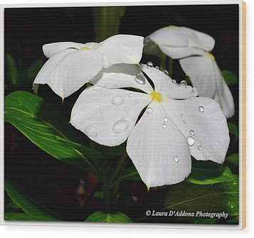 White Vincas Wood Print by Laura DAddona