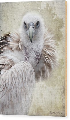 White Vulture  Wood Print by Barbara Orenya