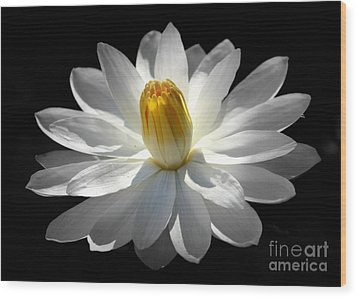 Wood Print featuring the photograph White Water Lily #2 by Lisa L Silva