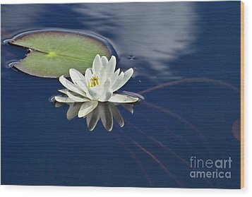White Water Lily Wood Print by Heiko Koehrer-Wagner