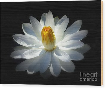 White Water Lily Wood Print by Lisa L Silva