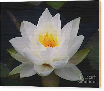 White Water Lily Wood Print by Nina Ficur Feenan