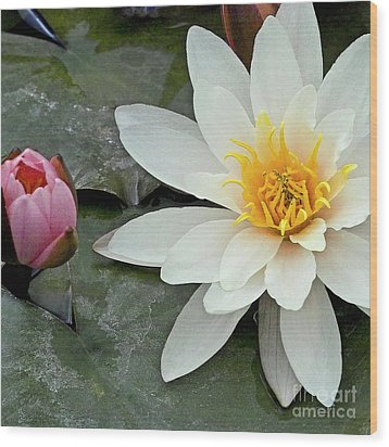 White Water Lily Nymphaea Wood Print by Heiko Koehrer-Wagner