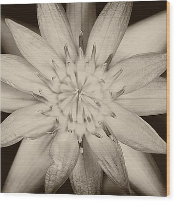 Lotus Wood Print by Ulrich Schade