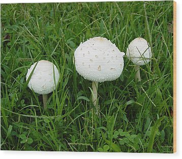 Wood Print featuring the photograph White Wild Mushrooms by Dorothy Maier