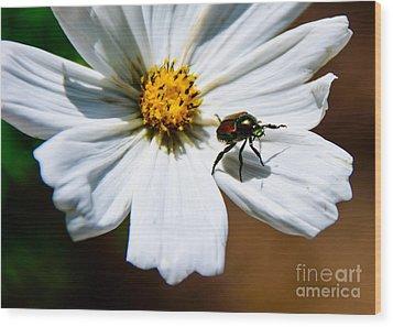 White Wildflower Wood Print by Lisa L Silva