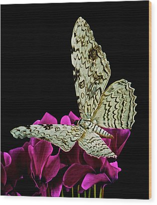 White Witch Moth Resting At Midnight  Wood Print by Leslie Crotty
