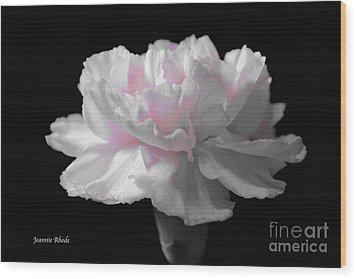 Wood Print featuring the digital art White With Pink Carnation by Jeannie Rhode