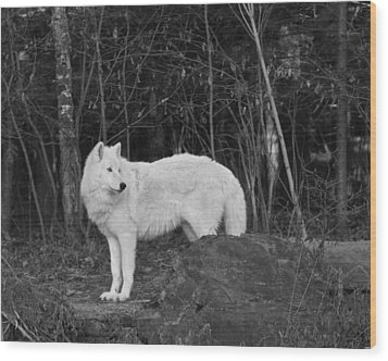 White Wolf Wood Print by Kate Purdy