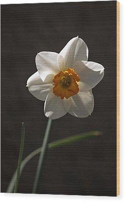 White Yellow Daffodil Wood Print