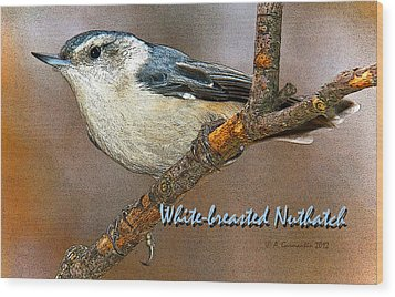 Wood Print featuring the photograph Whitebreasted Nuthatch by A Gurmankin