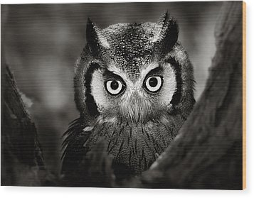 Whitefaced Owl Wood Print by Johan Swanepoel