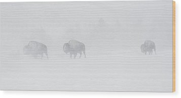 Whiteout Wood Print by Sandy Sisti