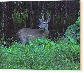 Whitetail Buck 015 Wood Print