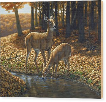 Whitetail Deer - Autumn Innocence 1 Wood Print by Crista Forest