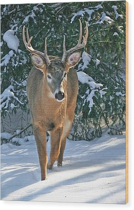 Whitetail Deer Eight Point Wood Print