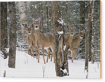 Whitetail Deer Odocoileus Virginianus Wood Print by Gregory K Scott
