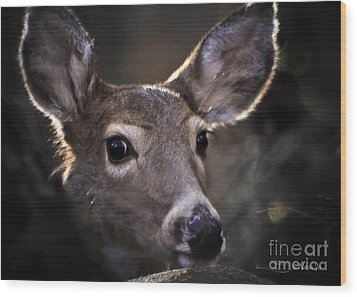 Whitetail Doe Wood Print by Nava Thompson