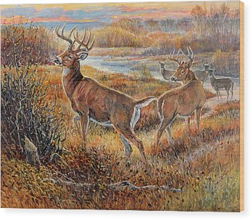 Whitetail Sunrise Wood Print by Steve Spencer
