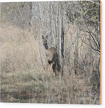 Whitetail Undercover Wood Print by Lori Tordsen